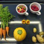 Erste Gemüse-Ernte 2016