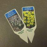 Pflanzeit für Blumenzwiebeln