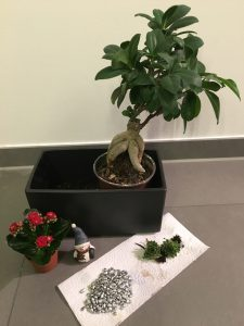 Mini-Garten im Topf – Mein Stadtgarten