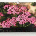 Schafgarbe – eine tolle wilde Heilpflanze