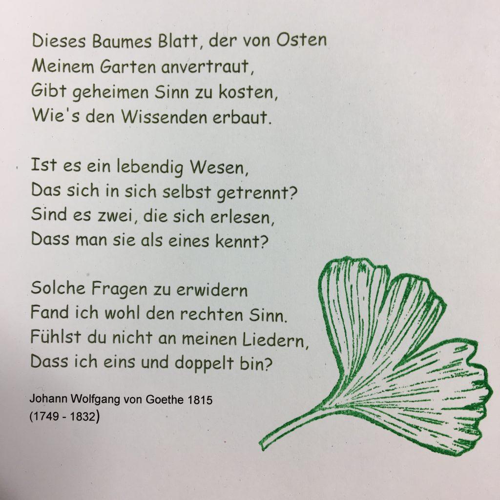 Ginkgo Go Für Blutfluss Und Gedächtnis Mein Stadtgarten